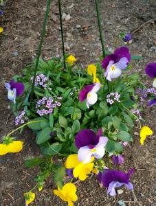 Cheshire Floral Farm